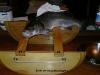 Spigola 1,5 kg