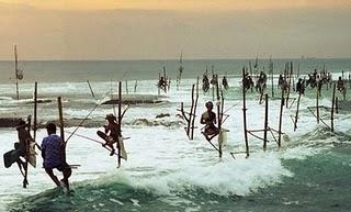 stilt fishing sri_lanka